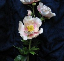 Floral - Tombi Peck Founder member - Peony spray